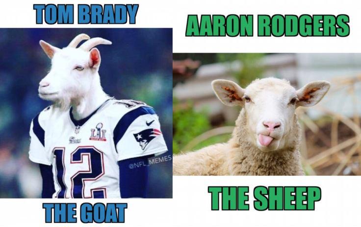 goat vs. sheep